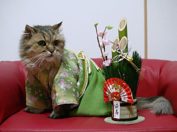 cats-wearing-kimonos-5