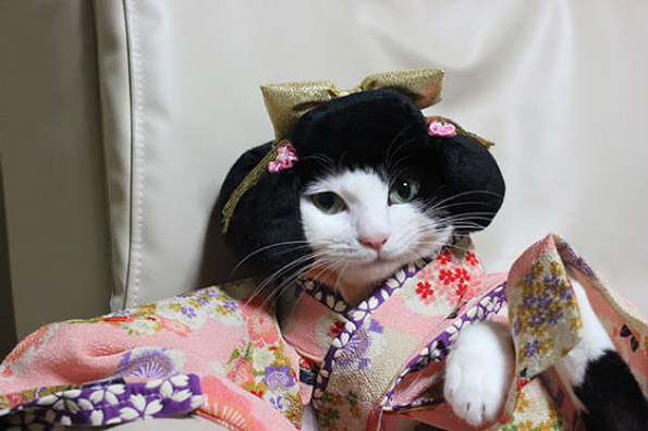 cats-wearing-kimonos-6