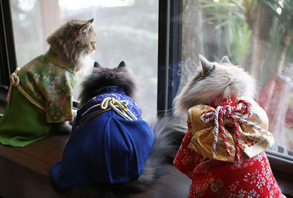 cats-wearing-kimonos-7