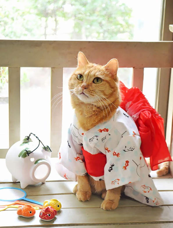 cats-wearing-kimonos-8