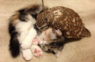 You Guys, These Kitten And Owl Best Friends Are TOO CUTE