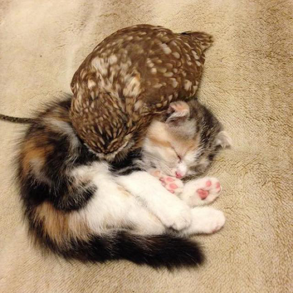 these kitten and owl best friends are too cute