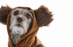 Check Out Petco's New Line Of Star Wars Toys For Cats & Dogs