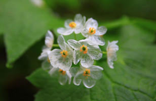 Watch These Skeleton Flowers Turn See-Through When It Rains
