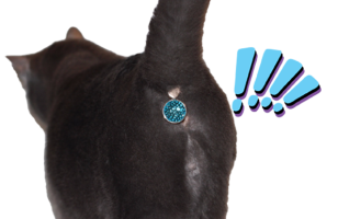 Twinkle Tush Is A Sparkly Gem That Covers Your Cat's Butt…