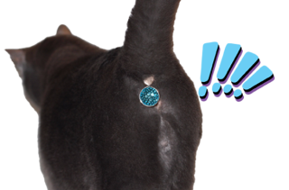 Twinkle Tush Is A Sparkly Gem That Covers Your Cat's Butt...