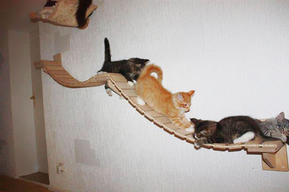 These Overhead Playgrounds For Cats Is A Kitty S Paradise