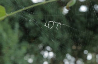 Charlotte's Back!: You Have Got Too See This Spider Web LOL