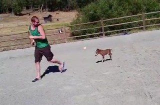 You Have To Watch This Tiny Miniature Horse To Believe It