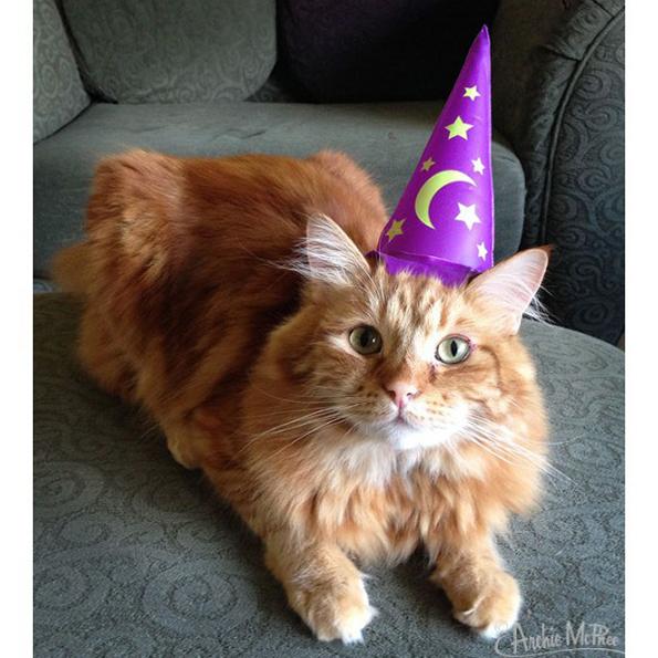 cat-wizard-hat-1