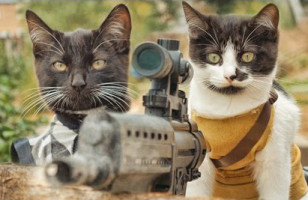 Two Cute Kitties Take On The Undead In Cats Vs Zombies