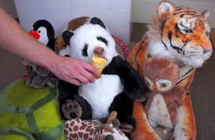 Watch This Stuffed Panda Bear Devour An Ice Cream Cone