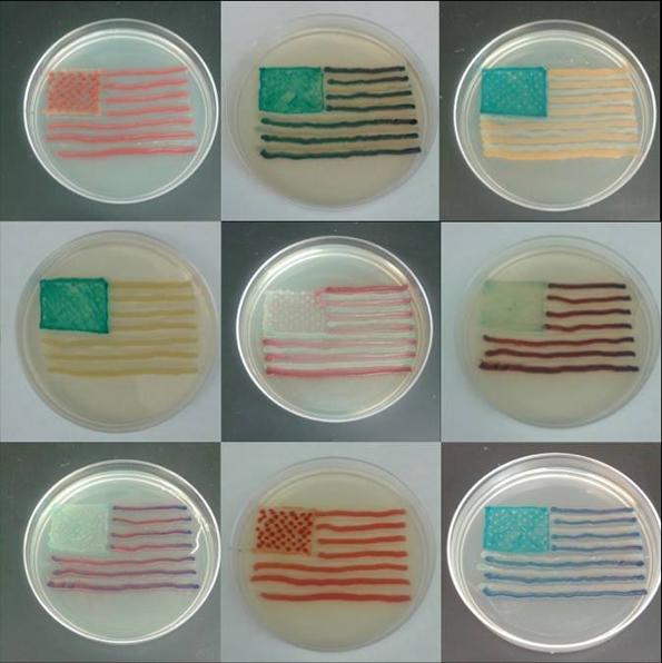 bacteria-art-5