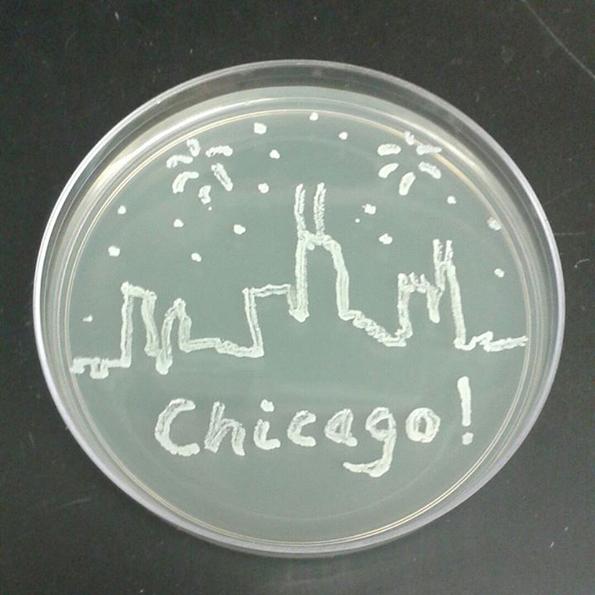 bacteria-art-9