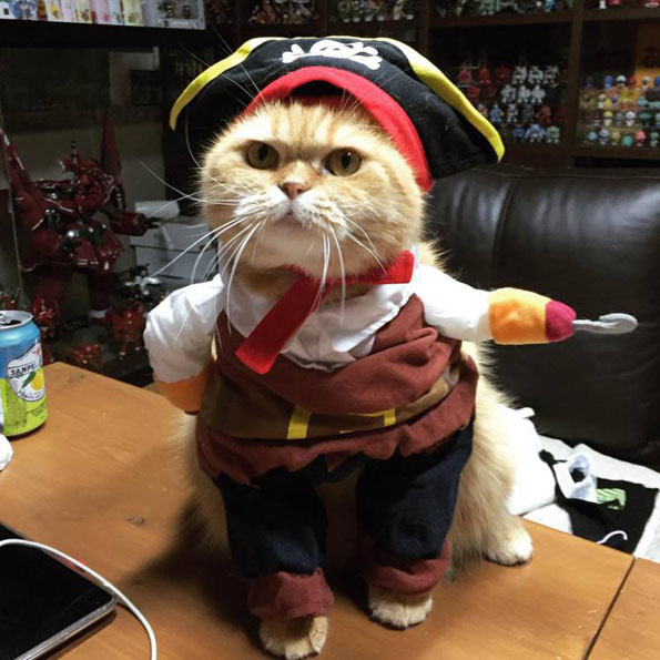 Check Out This Cat Dressed As Jack Sparrow