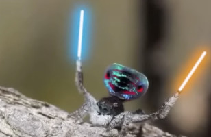 A Peacock Spider Dancing With Lightsabers Is Magical AF