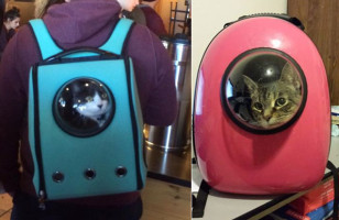 This Pet Carrier Has A Window For Your Furbaby To Peek Out Of