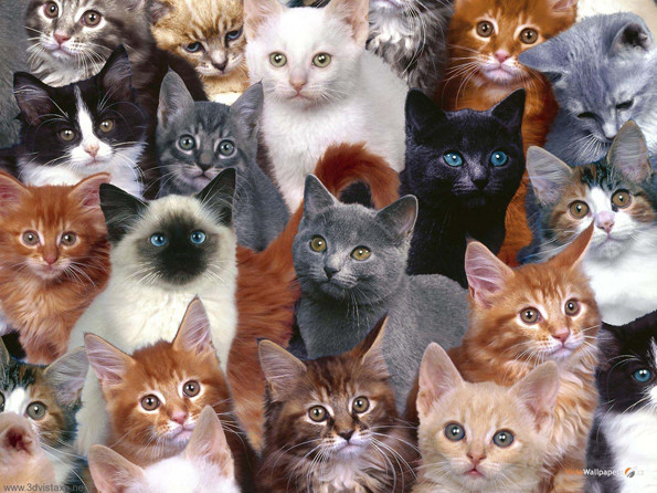 catconla-first-cat-convention