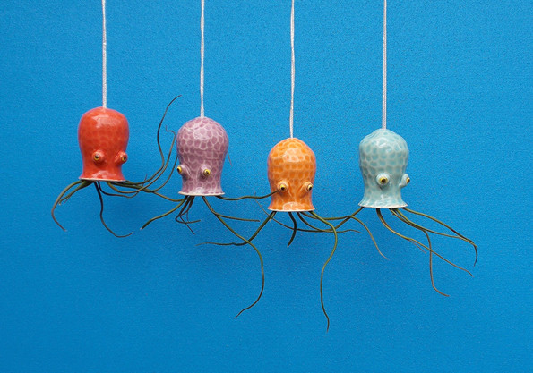 cephalopod-air-plant-holders