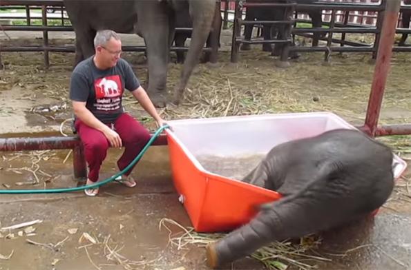 goofy-baby-elephant-bath