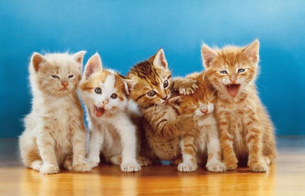 WALTER CHANDOHA_FIVE KITTENS
