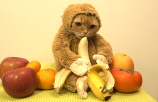 Here's A  Cat In A Monkey Costume Licking A Banana, NBD