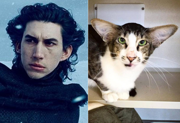 planet mars gifts with Cat That Looks Like Kylo Ren Incredible Links on The pla s likewise 7th birthday magic t shirt 235157247193718378 in addition 4240611 besides Super Moon Transparent Background Image as well Total Eclipses Pla s.