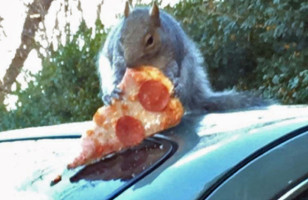 All Hail Pizza Squirrel & More Incredible Links