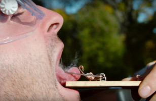 Now You Can Watch A Mousetrap Crush A Tongue In Slow Motion