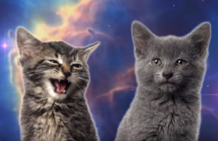 Stop What You're Doing & Watch This Space Cats Music Video