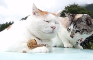 What Happens When You Bring Together Two Cats And A Snail?