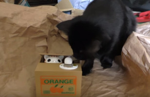 Cats React To A Japanese Cat Piggy Bank, Hilarity Ensues