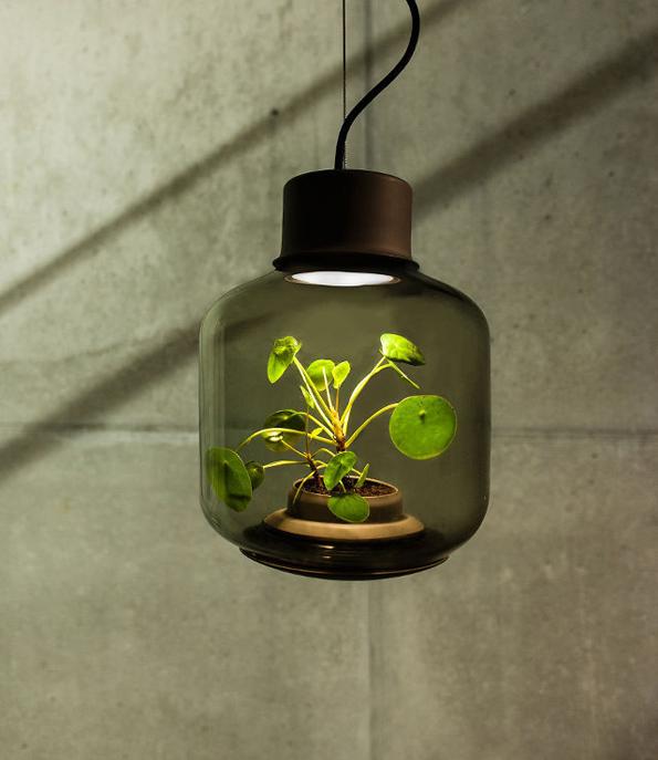 plant-lamps-2