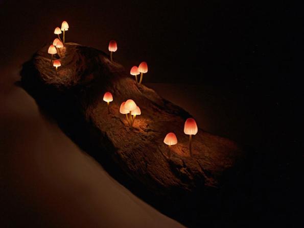 mushroom-lamps-6