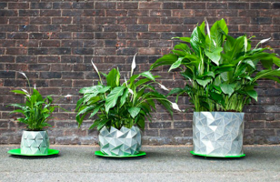 No More Repotting: The Origami Pot Grows With Your Plant