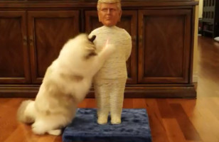 A Donald Trump Cat Scratching Post For Your Political Kitty