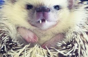 Vampire Hedgehog & More Incredible Links
