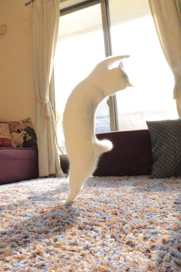 ballet-cat-2