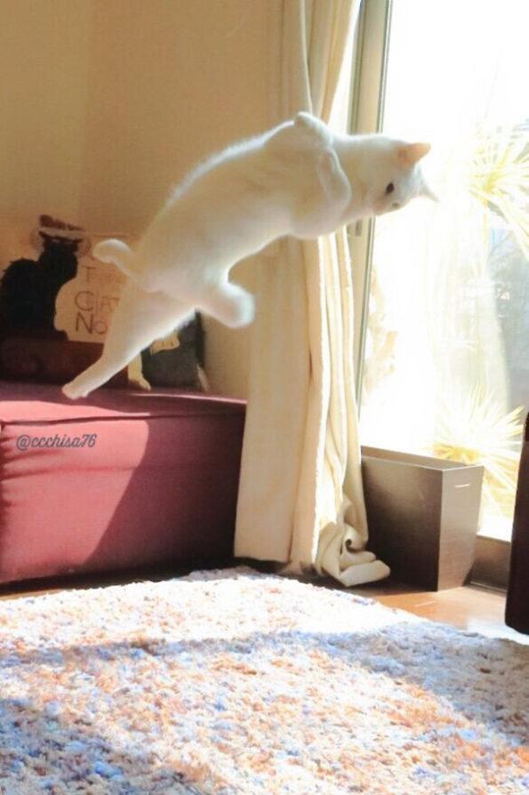 ballet-cat-3