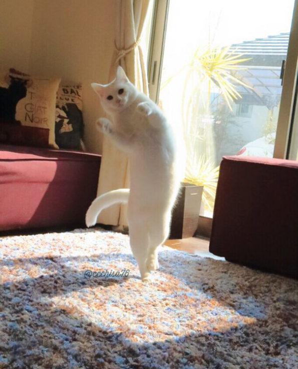 ballet-cat-5