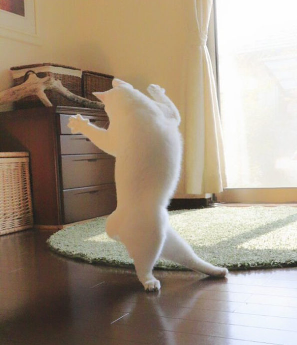 ballet-cat-6