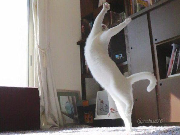 ballet-cat-7