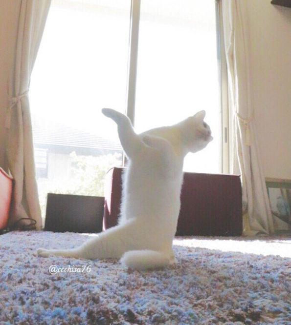 ballet-cat-8
