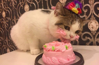 This Cat Eating Cake Will Make You Smile Your Face Off