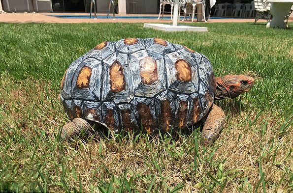 tortoise-3d-printed-shell-freddy-1