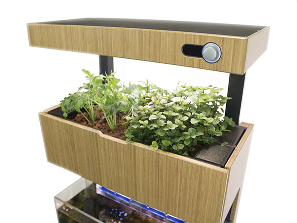 A Genius Self Sustaining Garden And Aquarium Combo