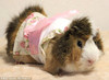 Pretty Little Guinea Pig Fashion Line