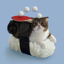 Sushi Cats: A Bizarre Photoseries