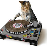 Cat Scratch Turntable Cat Toy