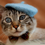 Cat French Berets